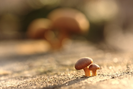 Allegoric picture with growing up mushrooms photo