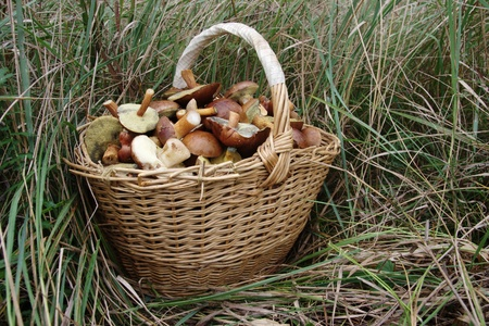 basket full of mushrooms in the grass photo