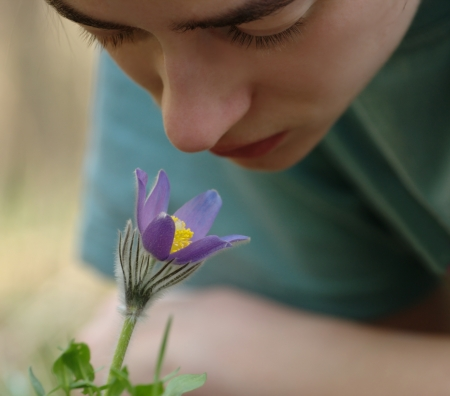 nice girl smelling a pasquelflower