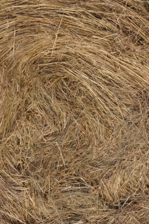 Yellow straw texture background photograph photo