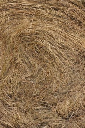 Yellow straw texture background photograph photo