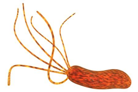 unicellular: Immagine di rendering 3D di Helicobacter pylori batterio dello stomaco isolato su bianco Archivio Fotografico