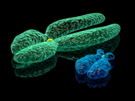 chromosome x y: 3d render illustration of X and Y chromosomes Stock Photo