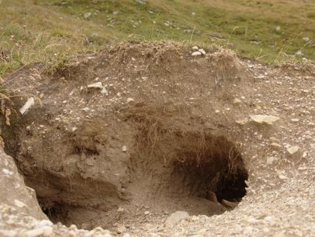 burrow: Entrance to marmot hole in alpine meadow Stock Photo