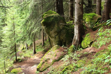 beautiful forest with moss and stones photo