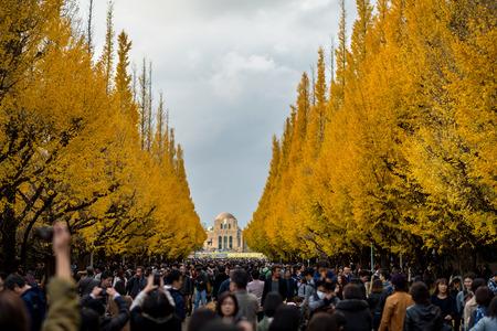 Ginkgo trees along Icho Namiki Street in Tokyo