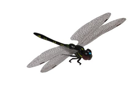 chitin: Dragonfly isolated on a white background