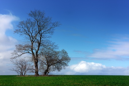 Spring landscape, green field lonely tree and the blue sky