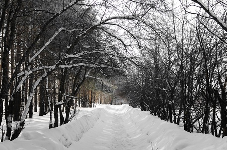 Sidewalk covered with snow in an environment of trees Stock Photo - 13453488