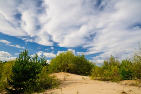 Sandy soil: Paisaje de verano con el suelo arenoso, un arbusto y un cielo nublado azul. Foto de archivo