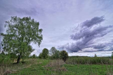 natural moody: Dark dramatic landscape stormy sky over wetlands Stock Photo