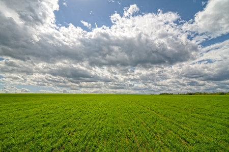 Wheat on a field and blue sky with clouds