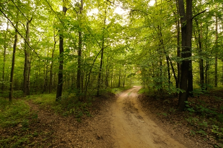 Road in a beautiful forest in the morning Stock Photo