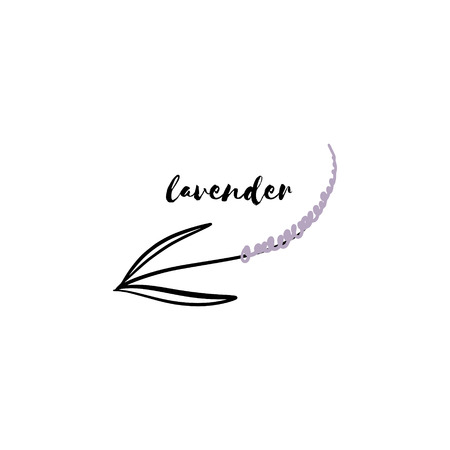Vector hand drawn sketch of lavender branch. Element for design labels, logo, packages, textile and other