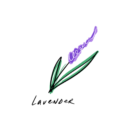 Vector watercolor isolated lavender flower. Floral element for design.