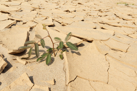 aridness: Green plant grow up in desert land. Stock Photo