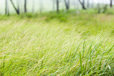 wind blown: Grass is blown by the wind. Stock Photo