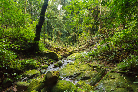 jungle scene: The beautiful of perfect forest. Stock Photo