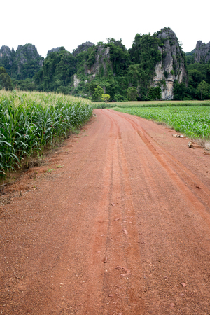 Gravel road with trace along with corn for feed