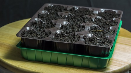 Plastic container with cells and garden soil. Prepared for planting seedlings. Water watered.