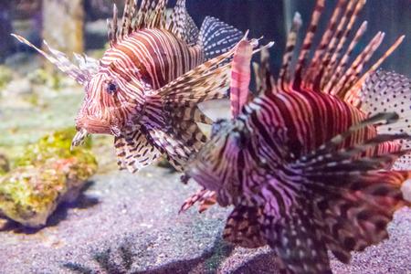fish tank: Fish in A Fish Tank