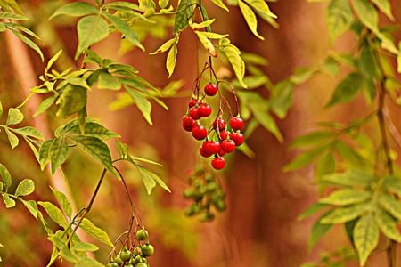 greem: australian wild berries