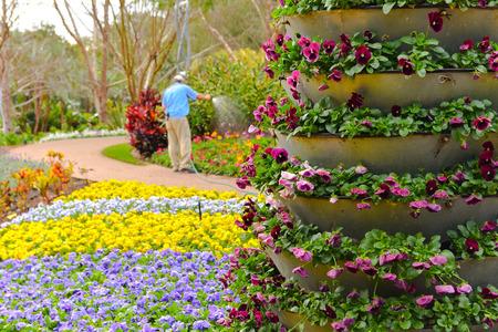 botanical gardens: Botanical Gardens Brisbane Australia