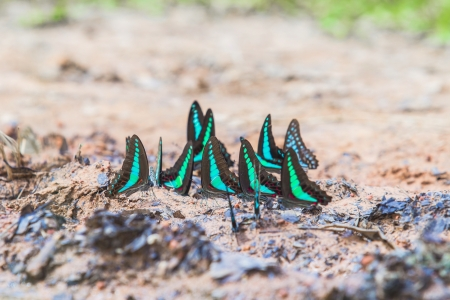 thialand: Butterfly need salt from earth deep in forests  Nation park Thialand Stock Photo