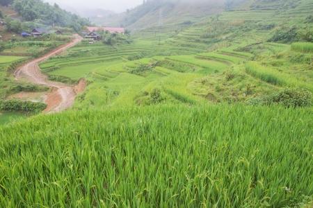 Rice Terraces in Cat Cat village Sapa Northern of Vietnam photo
