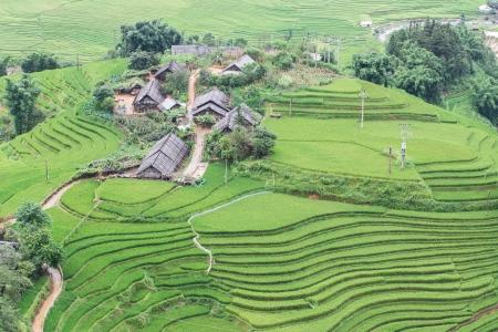 Rice Terraces in Northern of Vietnam