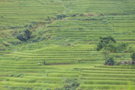rice terraces in Ta Van village at Sapa Vietnam photo