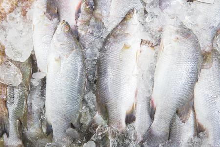 Fresh fish in market photo