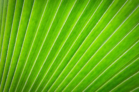 Green leaf texture background photo