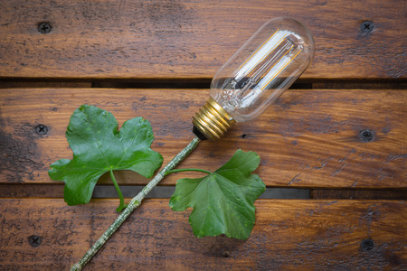 Conceptual image of  lighting of lamp use electric power from plant photo