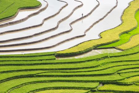 yuan yang: Terraced rice field in water season in Mu Cang Chai, Yen Bai province, Vietnam