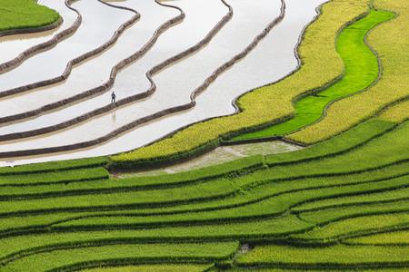 arroz: Campo colgante del arroz en la estación de agua en Mu Cang Chai, provincia de Yen Bai, Vietnam