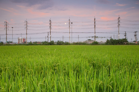 electric line: Rice field with electric line pillar at beautiful twilight in Thailand Stock Photo