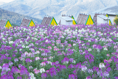 flowers field: Flowers field in front of the mini home and mountain background Stock Photo