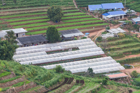 cultivation: View of greenhouse for transplant in mountain