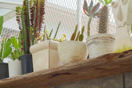 Selective focus outdoor flower pots for small garden, patio or terrace