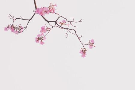 Fram of flower  pink background Stock Photo