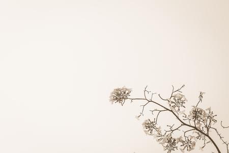 Fram of flower  black and white tone