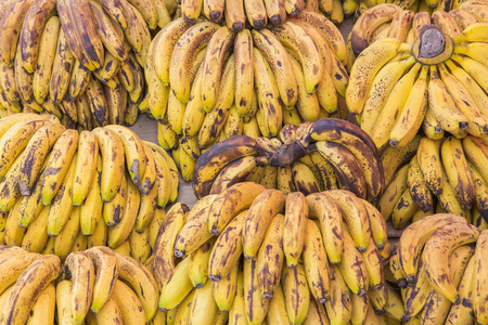 unblemished: Rows of ripe yellow bananas