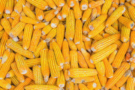 sector: corn for animals food