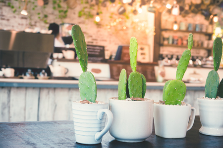 Green cactus in the white pot place on wooden table in of cafe