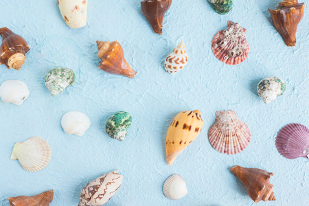 Seashells various on blue paper background, flat lay image Stock Photo