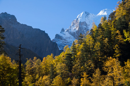 Colorful in autumn forest and snow mountain at Yading nature reserve, The last Shangri la, Daocheng-Yading, Sichuan, China Stock Photo - 121746703