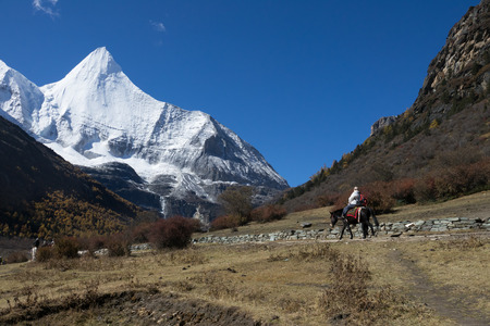 Riding a horse with snow mountain  in Yading national park, Sichuan, China