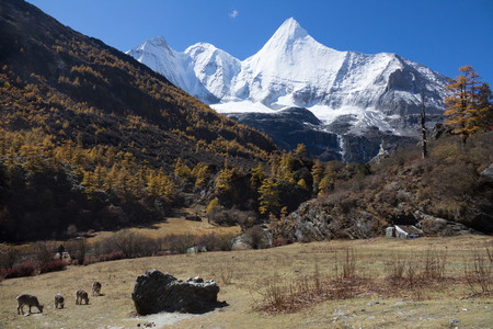 Mountain landscape,Snow Mountain in daocheng yading, Sichuan, China Stock Photo