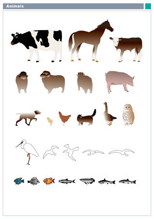 colorfulness: Various animals